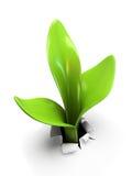 Sprout novo Imagens de Stock