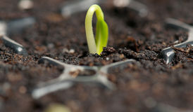 Sprout novo Fotos de Stock Royalty Free