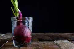 Sprout of onion in water Stock Photo
