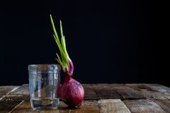 Sprout of onion in water Stock Image