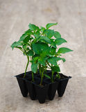 Sprout of paper. Little sprout of paper in pots for garden or greenhous Royalty Free Stock Photo