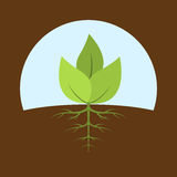 Sprout. Picture of a sprout with leaves and roots, flat style illustration Stock Photo