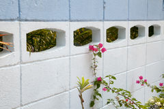 Sprout with pink flowers next to white and blue concrete fence Royalty Free Stock Images