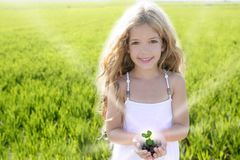 Sprout plant growing from little girl hands outdoor. Rice field Royalty Free Stock Photo