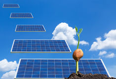 Sprout plant growing out of soil from seed with solar panels falling from sky. Royalty Free Stock Photography