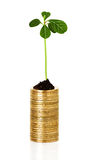 Sprout plant sprouting from coins Royalty Free Stock Photography