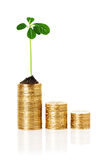 Sprout plant sprouting from coins Royalty Free Stock Photos