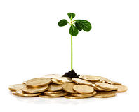 Sprout plant sprouting from coins Royalty Free Stock Photo
