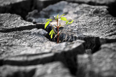 Sprout plants growing on very dry cracked earth Royalty Free Stock Photo