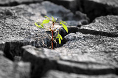 Sprout plants growing on very dry cracked earth Stock Photos