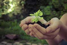 Sprout plants in human hands Stock Photos
