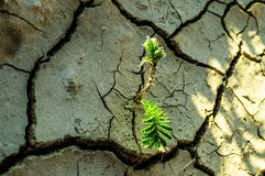 Sprout popping through the dry soil. Stock Photo