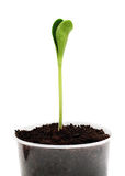 Sprout in the pot Royalty Free Stock Photo