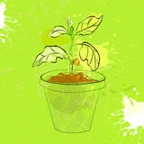 Sprout in a pot Royalty Free Stock Image