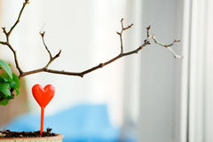 Sprout in a pot grown with heart canapes on the windowsill. Waiting for spring love concept. Copy space. Stock Photos