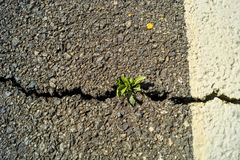 Sprout on the road. Sprout pierced asphalt on the road Royalty Free Stock Photography