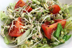 Sprout Salad Closeup. Salad Closeup with mung bean sprouts, broccoli seed sprouts, tomato, lettuce in a white bowl stock image