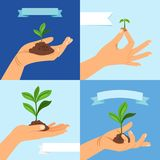 Sprout or seedling. Vernal plant in human hand. Sprout or seedling. Vernal plant with leaves and soil in human hand vector illustration Stock Images