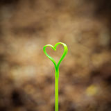 Sprout In The Shape Heart Stock Images