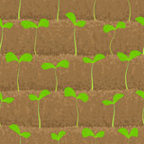 Sprout, shoot vegetable patches in row seamless Royalty Free Stock Photo