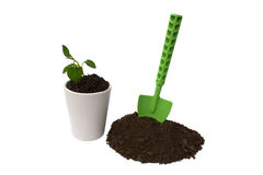 Sprout and shovel isolated on a white Royalty Free Stock Photography