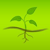 Sprout Royalty Free Stock Images