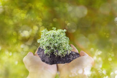 Sprout or small plant on hand with bokeh green tree bokeh backgr. Ound, environment tree and forest save,afforest Royalty Free Stock Photo