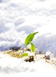 Sprout in snow Stock Photos