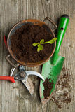 Sprout in soil with garden tools Royalty Free Stock Images