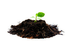 Sprout in soil Royalty Free Stock Photo