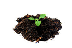 Sprout in soil Stock Photos