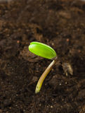 Sprout of soy Stock Images