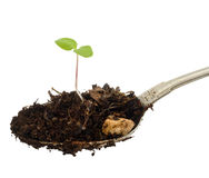 Sprout on a spoon Royalty Free Stock Images