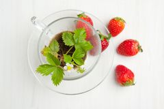 Sprout of  strawberry and fresh strawberries Stock Image