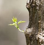 Sprout on tree bark Stock Image