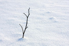 The sprout under snow Stock Photography