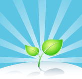 sprout. vector  Stock Photography