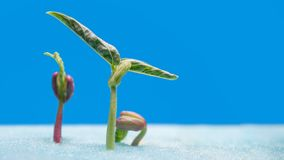 Sprout of vegetables for preparing Stock Photo