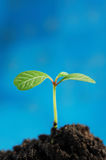 Sprout verde imagem de stock royalty free