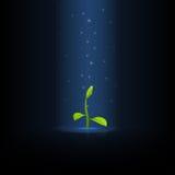 Sprout verde ilustração do vetor