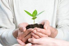 Sprout verde fresco Foto de Stock