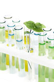 Sprout  in vitro Royalty Free Stock Photo
