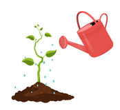 The sprout is watered with water from the watering can on a white background. Stock Photos