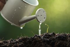Sprout watered from a watering can on nature background royalty free stock photography