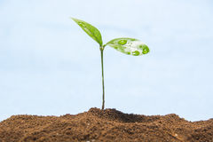 Sprout Stock Image