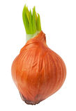 Sprouted brown onion Stock Photos