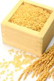 Sprouted brown rice and ear of rice Stock Image