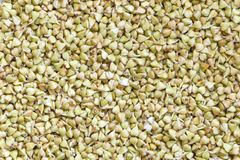 Sprouted buckwheat background. Top view. Organic raw hulled groats. Close up background with copy space. Concept of healthy nutrition. Vegan food royalty free stock photography