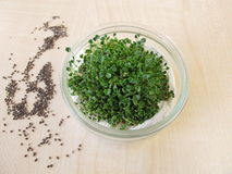 Sprouted chia seeds. In glass bowl royalty free stock photo