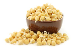 Sprouted chick peas in a brown bowl Royalty Free Stock Image